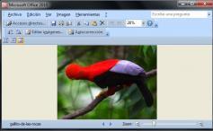 Ventajas y Desventajas de Microsoft Office Picture Manager